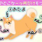【心理テスト】柴犬のどこか「1ヶ所」しか触れないとしたら... どこにする?
