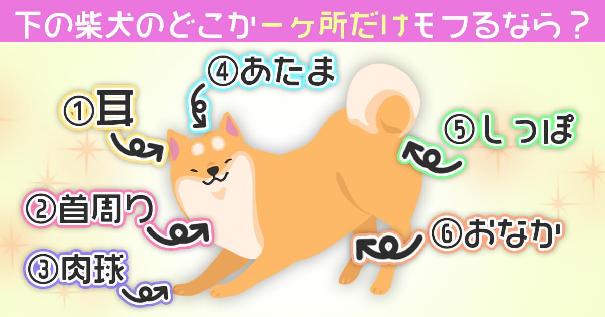 柴犬 ギャップ 心理テスト