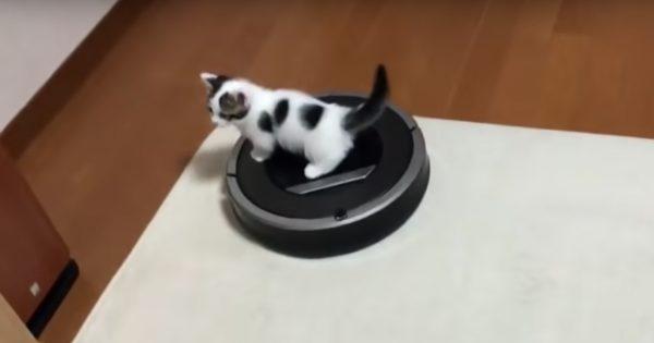 ルンバを乗りこなす子ネコ、かわいすぎんか?