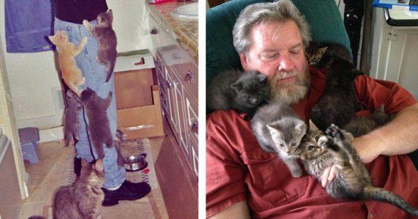子猫の集団に襲われた被害者たち 12選