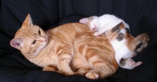 橋から落ちた子猫、先住猫のサポートで奇跡の回復!よかった🐱✨