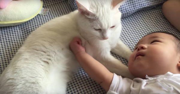 3連休の始まりに「赤ちゃん x ネコ」で癒されておこうぜ👶🐱