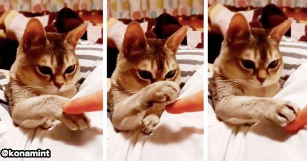 ネコ VS 人間の「指乗せ選手権」に16万いいね🐱