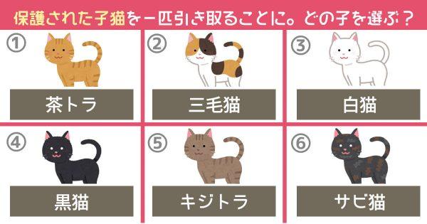 【心理テスト】保護された子猫を「1匹だけ」引き取るなら、どの子を選ぶ?