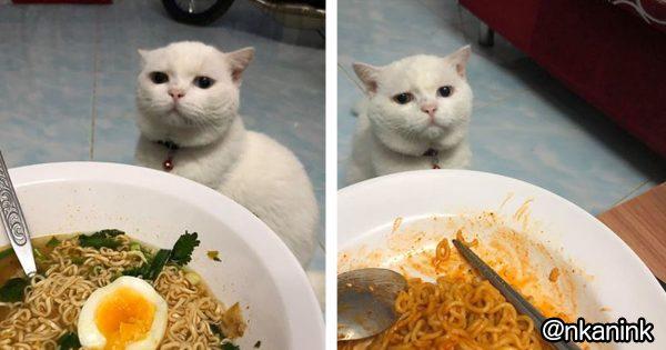 【圧力スゴい】ご主人の食事を見つめるネコの表情www