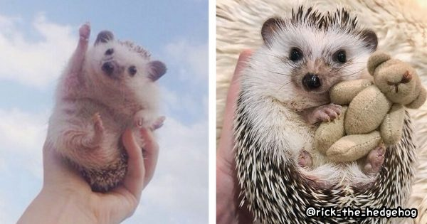 @rick_the_hedgehog