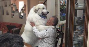 「大好きな人」に会った大型犬、甘えん坊モードに突入
