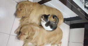 この犬と猫、これまで見た中で「一番仲良し」だと思う
