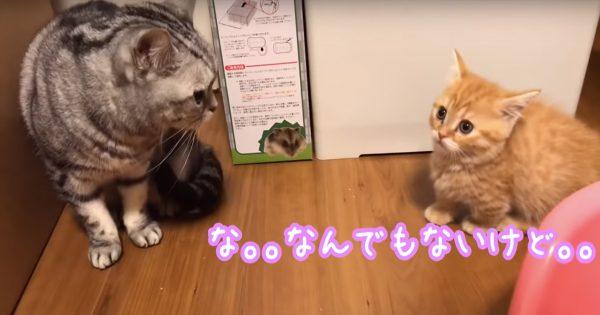 先住ネコに甘えたい子ネコ、可愛すぎん?