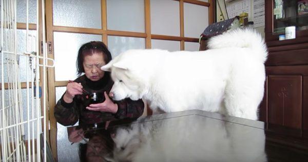 食事中のおばあちゃんに、無言の圧力をかける秋田犬