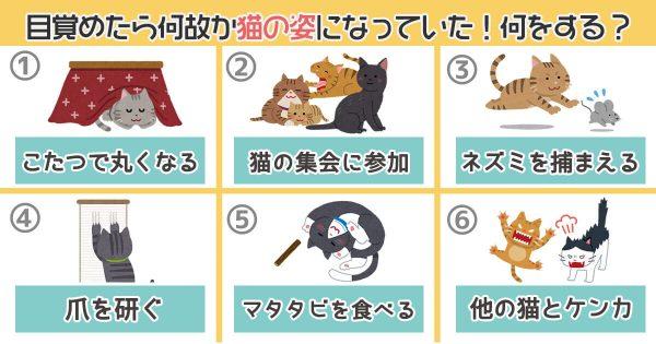 【心理テスト】突然、猫になったら何する?