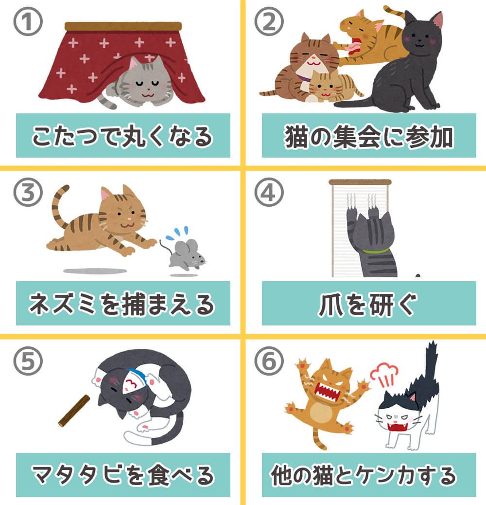 猫 トラブル 心理テスト