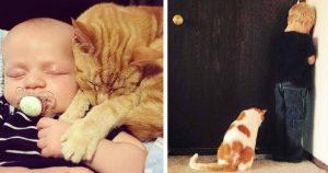 猫、ベビーシッター説 12選
