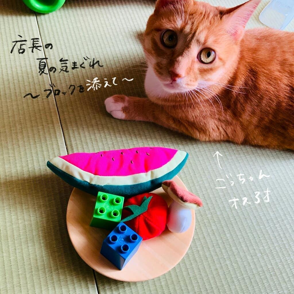 kyoko_yuge_66435217_121148489200261_5762050431575163808_n