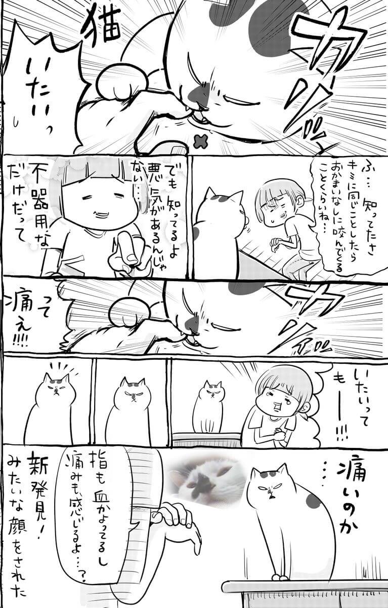 犬と猫02