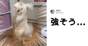 これだからネコを撮るのはやめられねぇ… 10選
