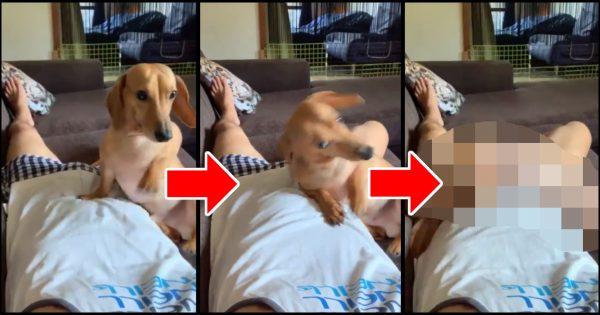 「メシよこせ!」ある犬のおねだりにTwitter民が爆笑