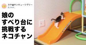 「子猫 VS 滑り台」の戦いが観てるだけで癒される