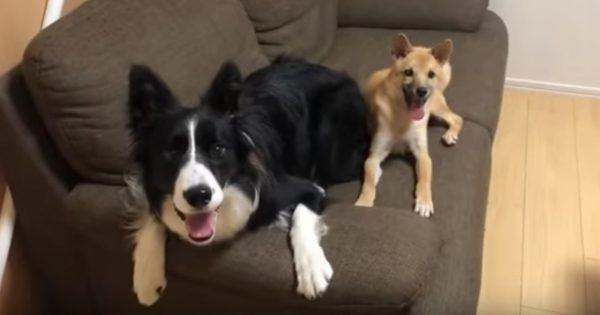 怯えた保護犬の心を開いたのは、1匹の先住犬でした