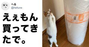 「人間感」のスゴい猫 8選