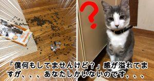 ネコって、顔見ればだいたい何が言いたいかわかるよね?8選