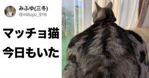 「マッチョ猫」が爆誕し、国内外で人気者に