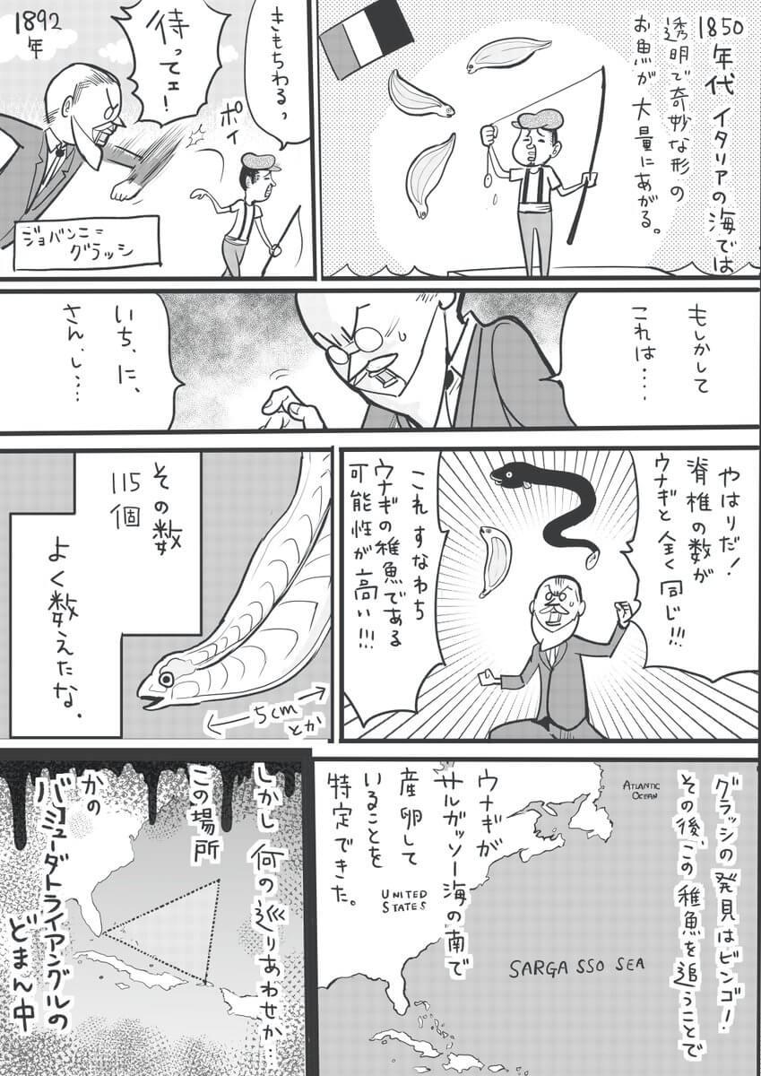 うなぎの研究の歴史03