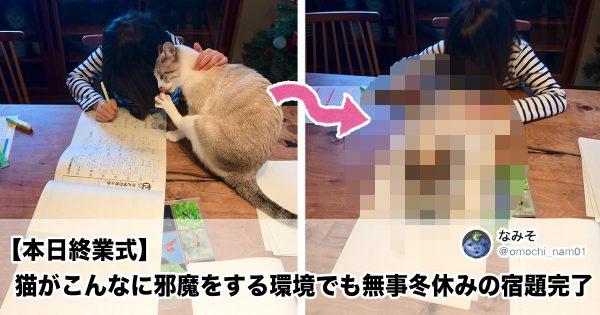 この「ネコの誘惑」に耐えられる人とかいるの?