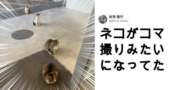 芸術的な「猫」 11選