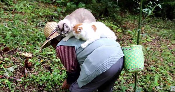 お婆さんの背中に乗って一緒に栗拾いをする2匹の猫が可愛すぎる!猫の幸せそうな表情に注目!