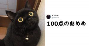人間を骨抜きにする「ネコの魔力」9選