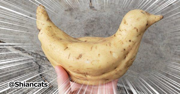 もはや笑いに特化した「野菜」9選