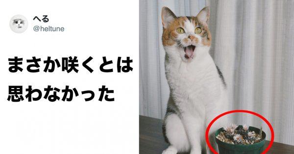 ネコってなぜこんなに表情豊かwww 8選