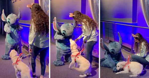 ディズニーで「スティッチに遭遇」した犬の反応がかわいすぎるって