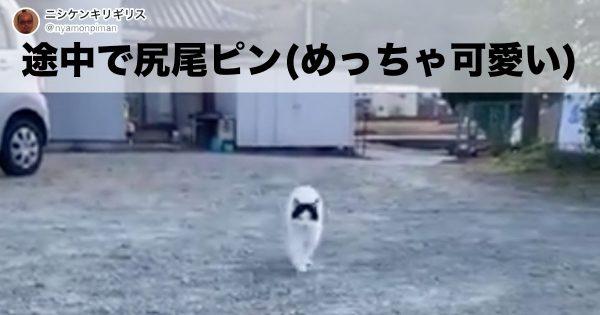 76,000人が魅了された「猫の尻尾」がすごいっ😺