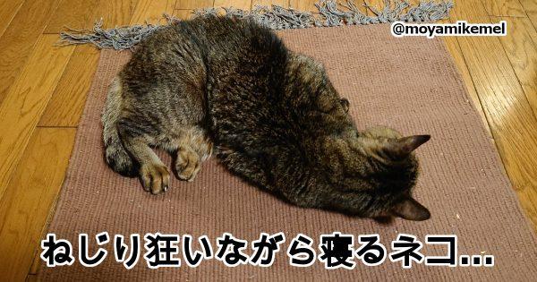 「寝てる猫」が最高に癒されるからとにかく見て 10選