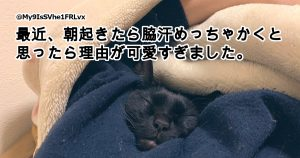 「好き好きアピール」がすごい猫ちゃん 8選