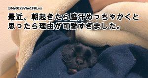 「好き好きアピール」がすごい猫ちゃん 8選