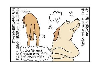hitsujinokuni.yu_79761961_485312585508010_7651604025344926475_n