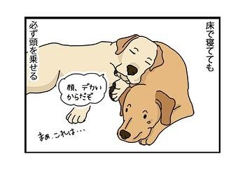 hitsujinokuni.yu_83910315_173449707080873_5078468321624900198_n