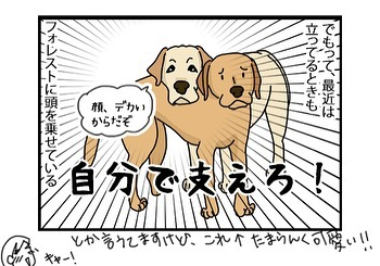 hitsujinokuni.yu_81120923_177245123655915_897533635912073321_n