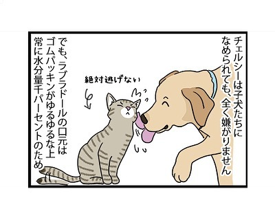 hitsujinokuni.yu_65058353_504653570109591_8680997129645454194_n