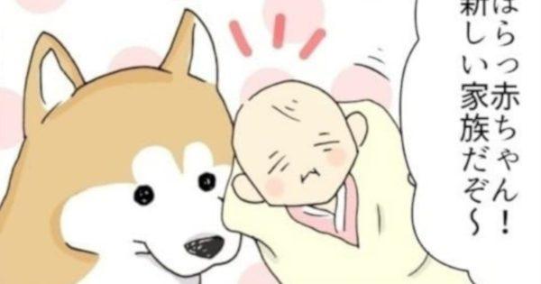 「赤ちゃん×柴犬」ってなんでこんなカワイイの…😇