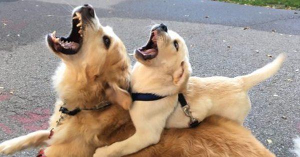 「犬の家族愛」がよ〜く伝わる画像 12選