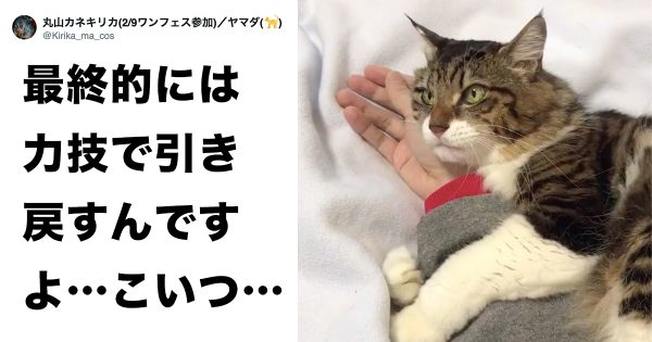 cathold