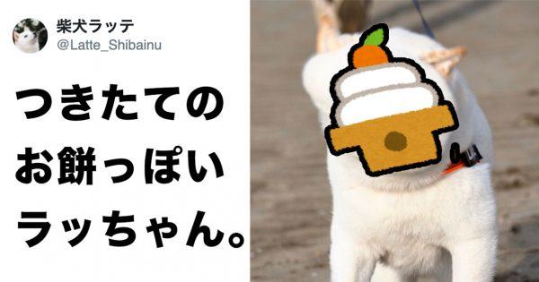 「つきたてのお餅」と完全一致した、柴犬が激写される