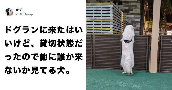 なぜ「犬の後ろ姿」はこれほどの、哀愁を感じさせるのか 7選