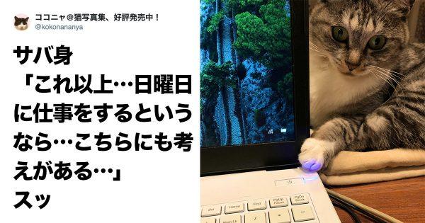 我輩は猫である。仕事は「邪魔すること」である 8選
