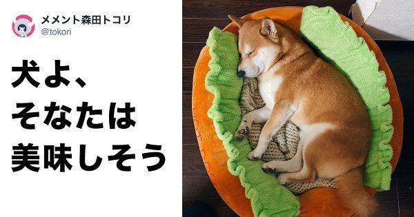 @tokori