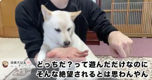 柴犬の「100%の絶望顔」が珍しすぎて笑っちゃったよ…